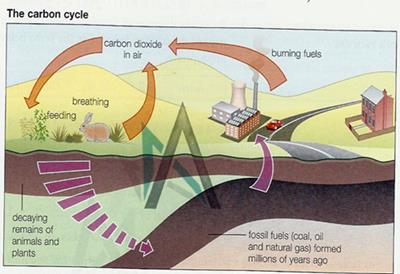 the carbon cycle in our life from fossil fuels to photosynthesis