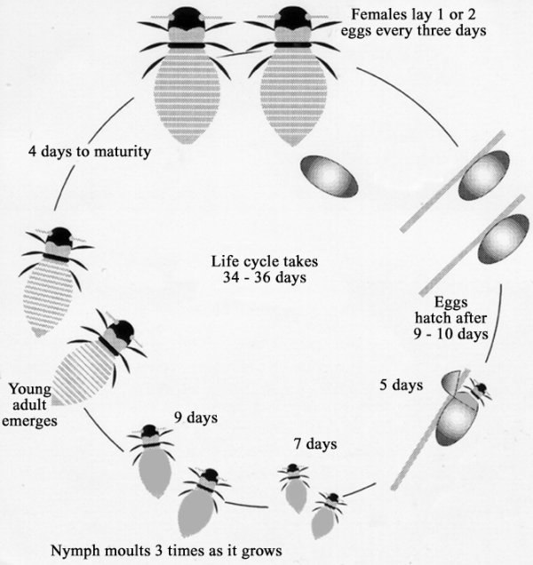 The diagram illustrates the various stages in the life of a honey bee ccuart