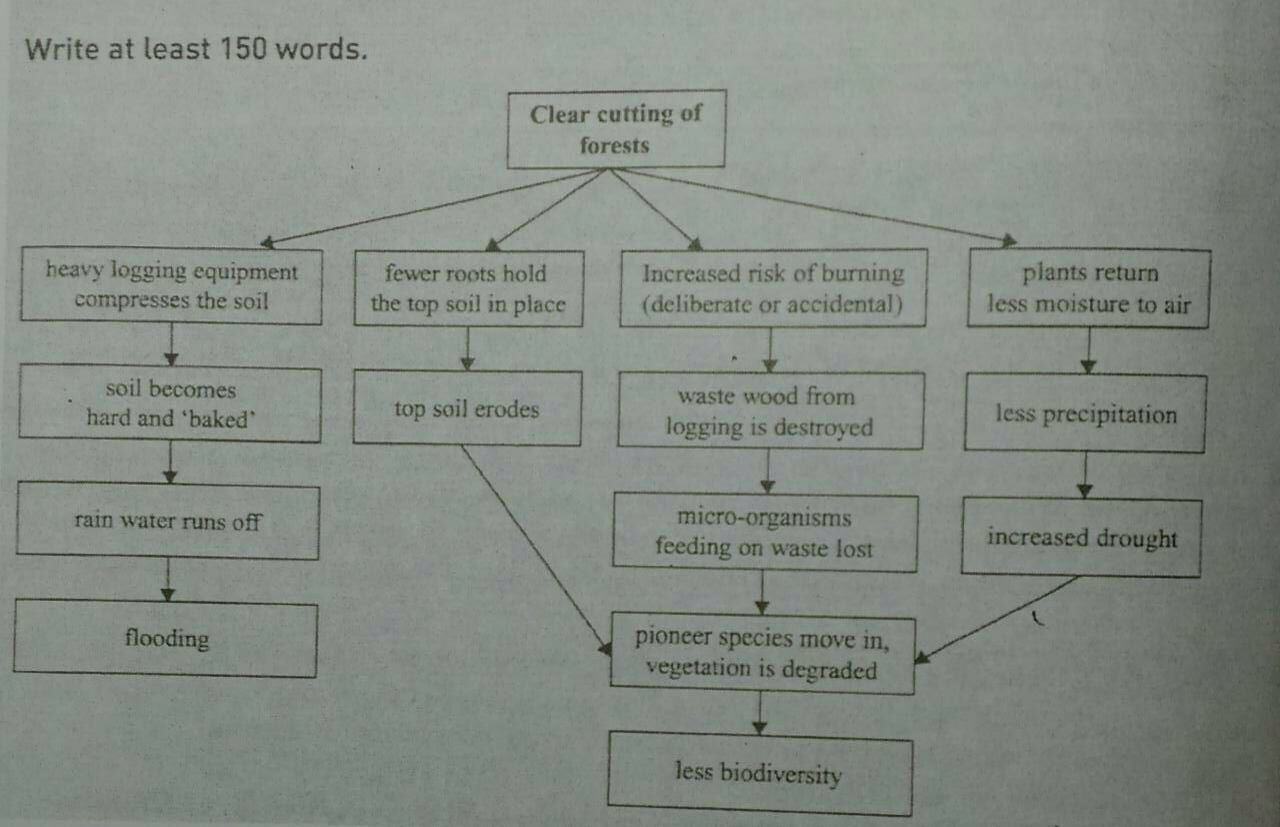 IELTS Task 1 - Environmental impacts due to over logging activities